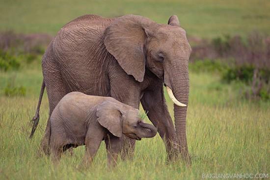 Tả con voi trong sở thú