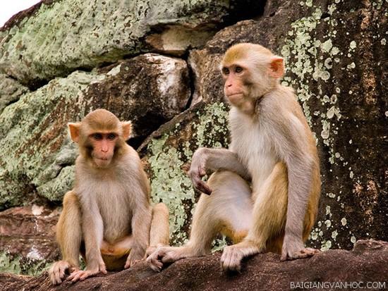 Tả con khỉ trong sở thú
