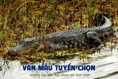 phan tich tac pham bat sau rung u minh ha - [Văn mẫu tuyển chọn] Phân tích tác phẩm Bắt sấu rừng U Minh Hạ của Sơn Nam