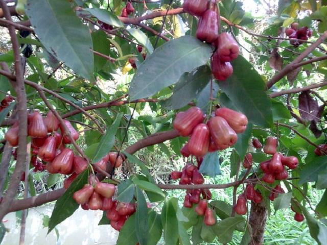 [Văn mẫu tuyển chọn] Phân tích truyện ngắn Mùa lá rụng trong vườn của Ma Văn Kháng