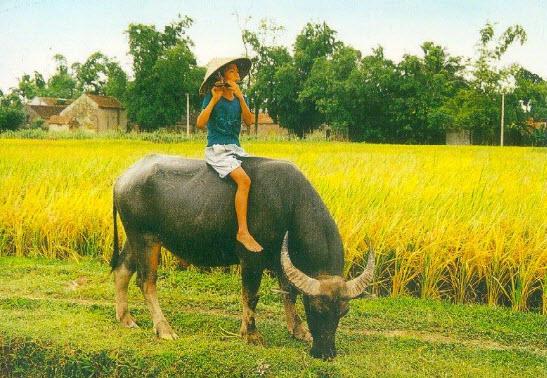 ta con trau o lang que viet nam - Tả con trâu ở làng quê Việt Nam