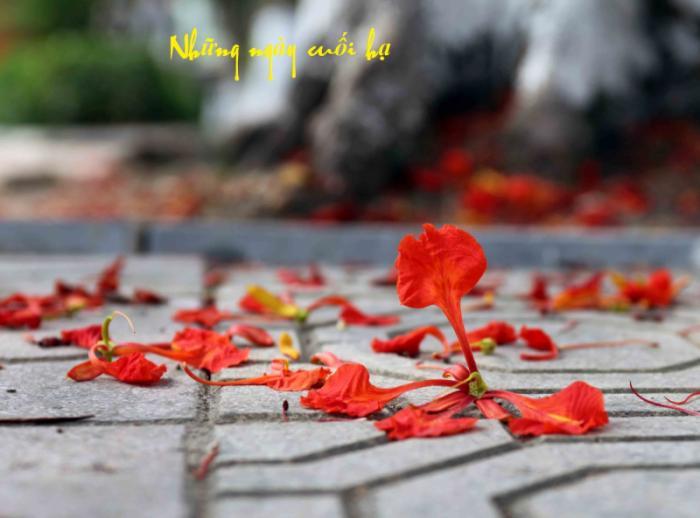 top 20 bai tho viet ve tuoi hoc tro hay nhat 29 - Top 20 Bài thơ viết về tuổi học trò hay nhất
